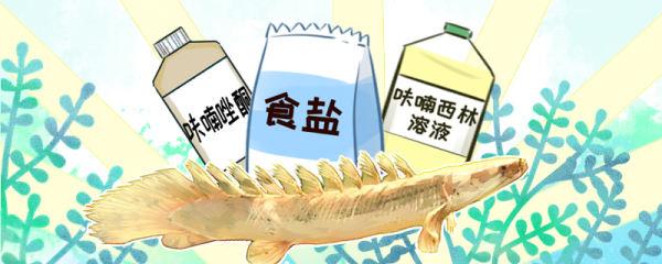 恐龙鱼常见病有哪些,如何进行治疗