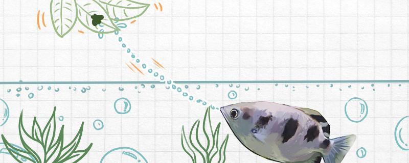 射水鱼为什么会喷水,射水鱼的本领介绍