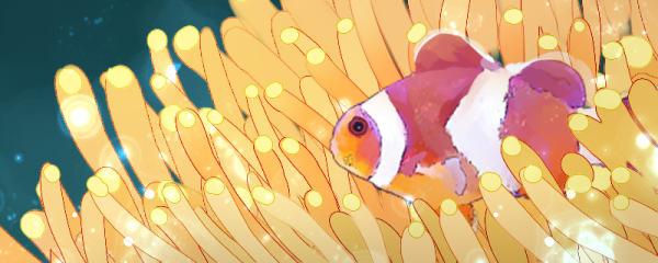 小丑鱼有毒吗,为什么碰到珊瑚不会中毒