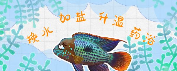 红尾皇冠鱼得了溃疡怎么办,红尾皇冠鱼的常见病及治疗方法介绍