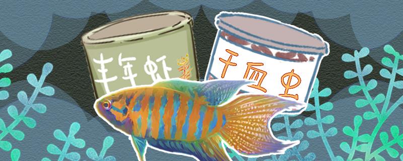 中国斗鱼吃什么食物,多久喂食一次
