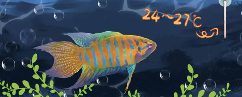 中国斗鱼是冷水鱼吗,可以用冷水养吗