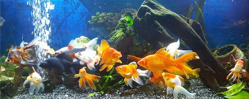 养鱼需要一直充氧吗,增氧泵一天开多久好