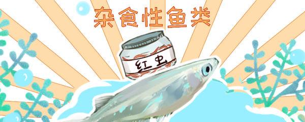 青鳉鱼吃什么,多久喂一次