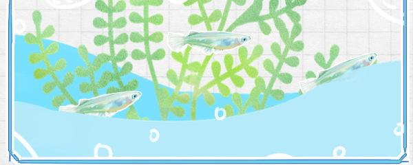 青鳉鱼用什么缸养好,要多大的缸