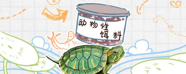 巴西龟吃什么,用什么龟粮好