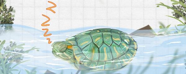 巴西龟冬眠吗,冬眠时间是什么时候