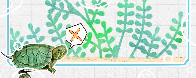 巴西龟能干养吗,干养多久会死