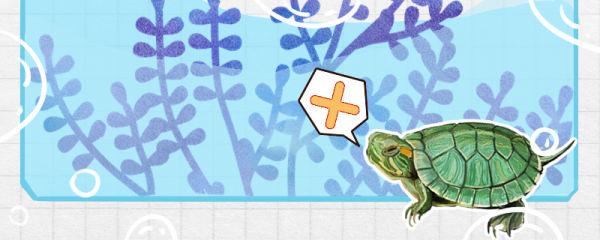 巴西龟能深水养吗,水深多少合适