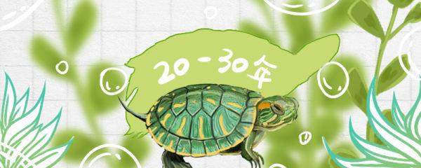 巴西龟能活多久,如何看年龄