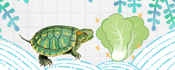 巴西龟一天喂几次,喂什么食物好