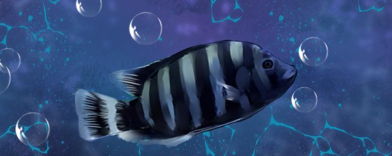 十间鱼好养吗,怎么养