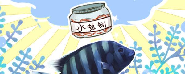 十间鱼吃什么,喂什么饲料好