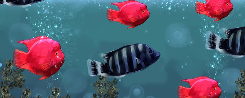 十间鱼能和什么鱼混养,能和地图鱼混养吗