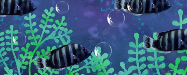 十间鱼怎么繁殖,多大能繁殖