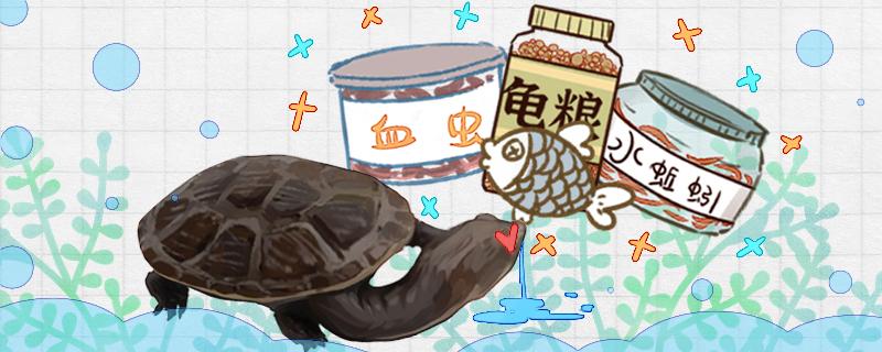 蛇颈龟吃什么,多久喂一次