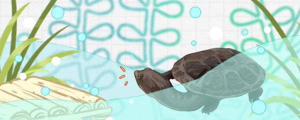 蛇颈龟多大属于幼龟,多大才可以深水养