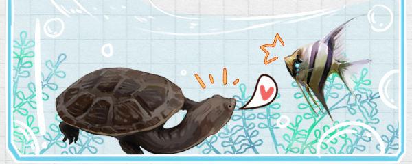 蛇颈龟好养吗,能和鱼混养吗