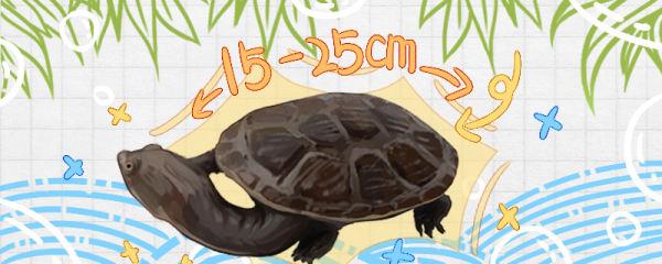 蛇颈龟能长多大,能活多少年