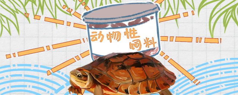金钱龟吃什么食物最好,多久吃一次东西正常