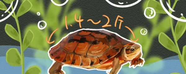 金钱龟好养吗,吃什么饲料