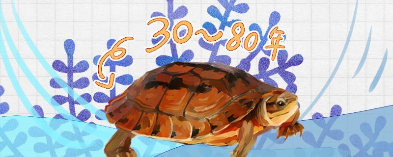 金钱龟能活多久,多大可以繁殖