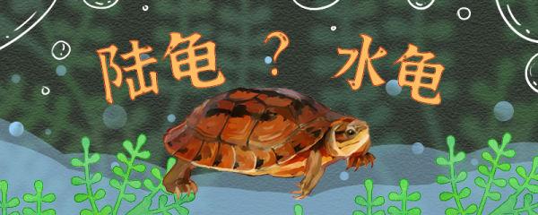 金钱龟是水龟还是陆龟,水深多少合适