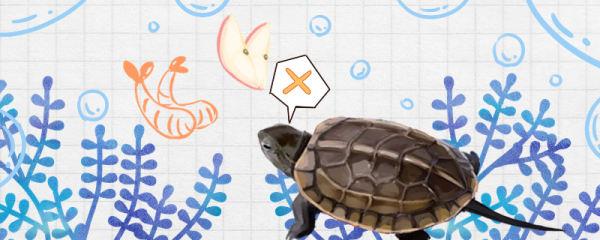 草龟不吃东西是什么原因,怎么处理