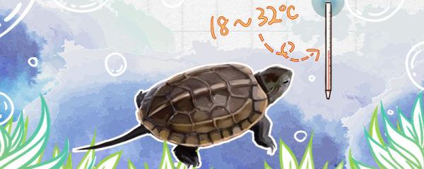 草龟怕冷吗,水温多少合适
