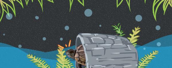 草龟需要躲避洞吗,需要晒台吗