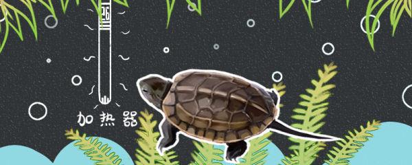 草龟需要加热棒吗,需要躲避洞吗