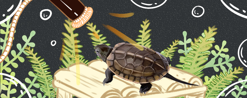 草龟需要晒太阳吗,需要晒背灯吗