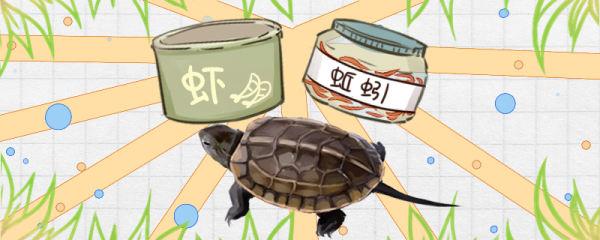 草龟长得快吗,怎么养长得快
