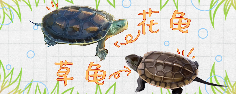 花龟和草龟的区别是什么,能一起养吗