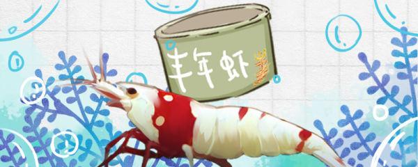 水晶虾吃什么食物,多久喂一次