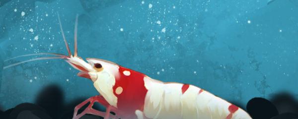 水晶虾用什么泥养好,用什么灯养好