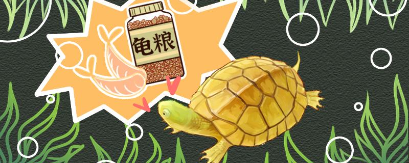 黄喉拟水龟吃什么,多久喂一次