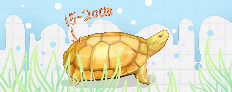 黄喉拟水龟能长多大,能活多久