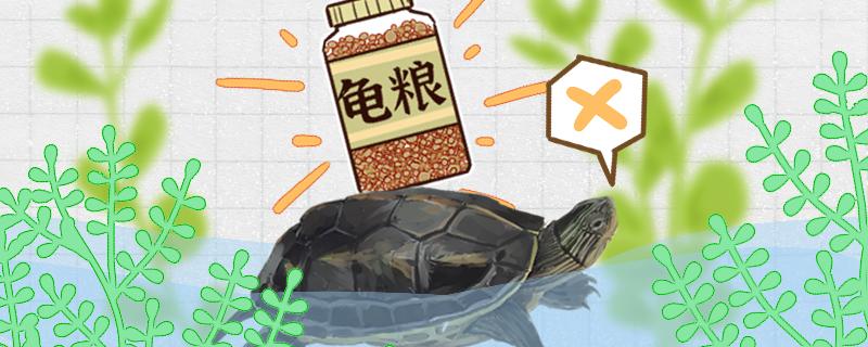 珍珠龟不吃东西是什么原因,怎么治疗