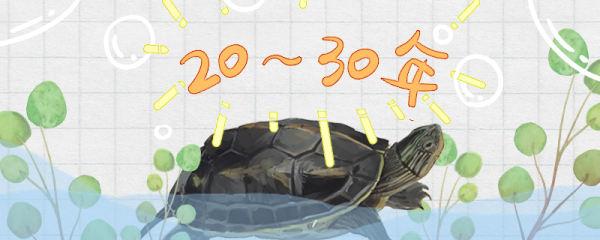 珍珠龟能活多久,多大算是成年