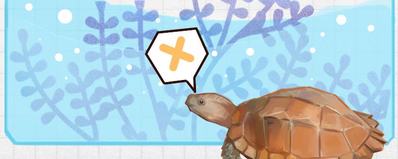 锯缘龟容易养吗,能不能水养