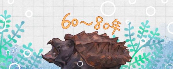 大鳄龟能活多少年,多久成年