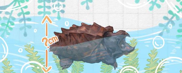 大鳄龟水位多深合适,水温多少合适