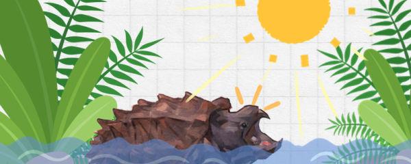 大鳄龟需要晒太阳吗,需要晒背台吗