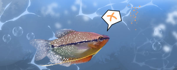 珍珠马甲鱼不吃东西是什么原因,怎么治疗