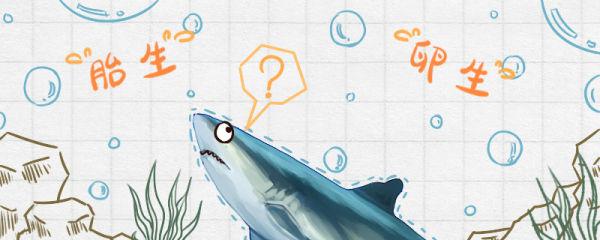鲨鱼是鱼吗,是胎生还是卵生