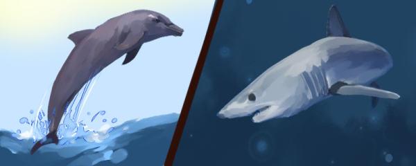 鲨鱼怕海豚是真的吗,鲨鱼和海豚哪个厉害