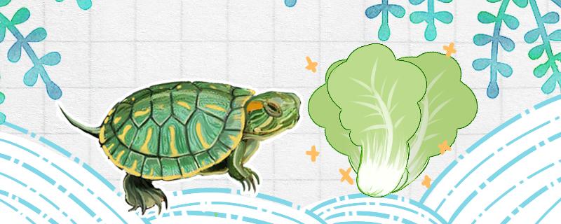 巴西龟吃菜叶吗,吃什么蔬菜