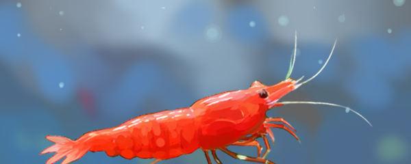 极火虾抱卵多久生小虾,生出的小虾怎么养