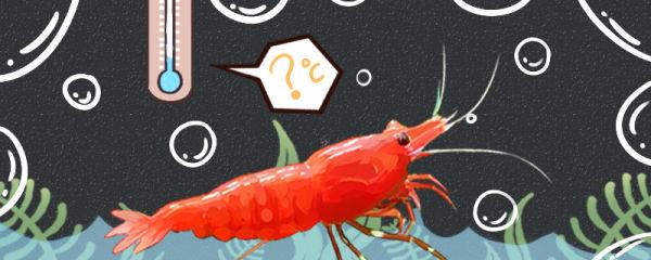 极火虾温度多少合适,需要加热棒吗